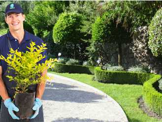 Jardinagem BRASILSERVIS